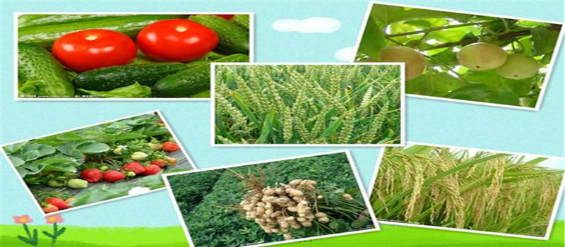 Outstanding performance to bio-fertilizer to the soil and plants